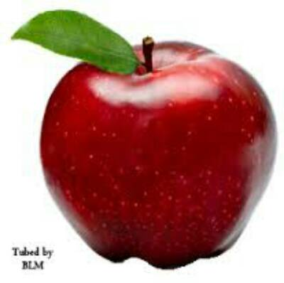 ربات ربات ضد لینک سیب