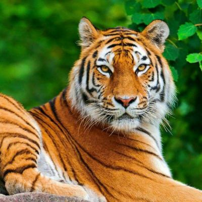 کانال عکس حیوانات
