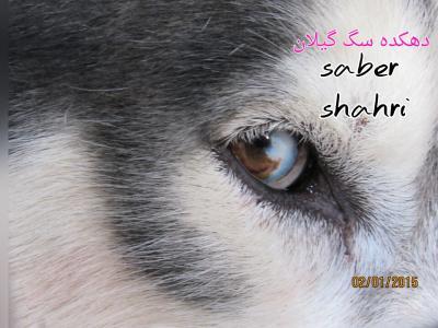 کانال آگهی خرید و فروش سگ