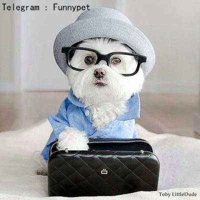 کانال عکس و کلیپ حیوانات خانگی