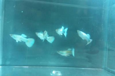 کانال فروش ماهیان زینتی
