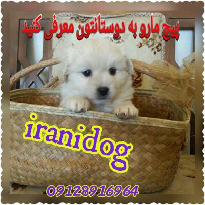کانال فروش حیوانات خانگی