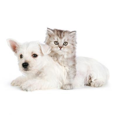 کانال cats & dogs