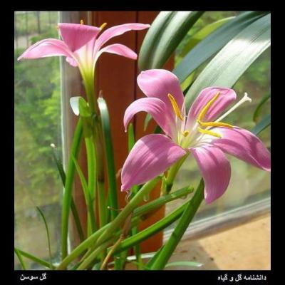 کانال دانشنامه گل و گیاه
