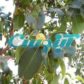 کانال مجله گیاهان دارویی آ
