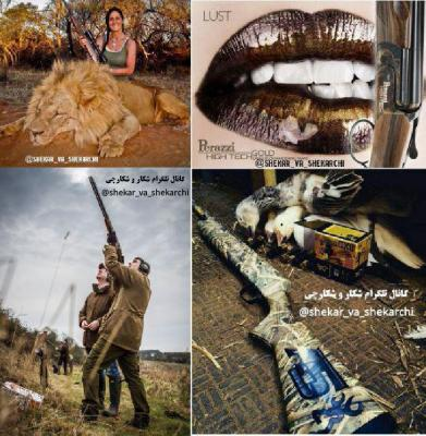 کانال شکار و شکارچی