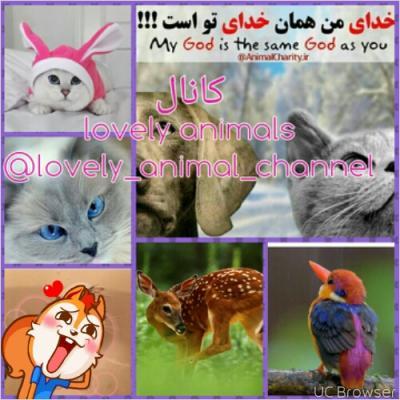 کانال lovely animals
