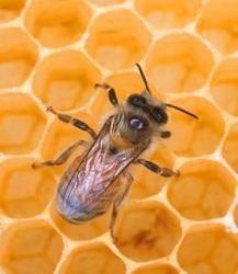 کانال طب و عسل درماني