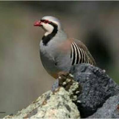 کانال پرندگان زیبای جهان