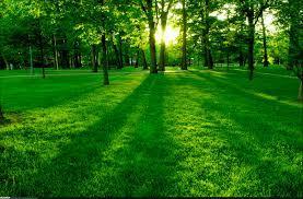 کانال زندگی سبز
