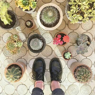 کانال 🌵 Mariya Cactus 🌵