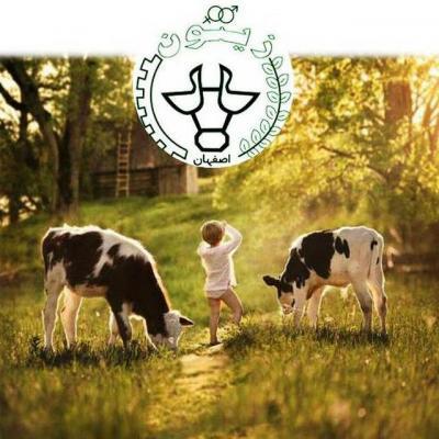 کانال پرورش گاو شیری