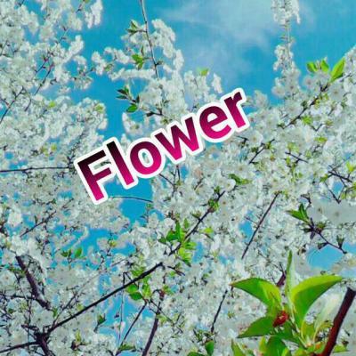 کانال Flower