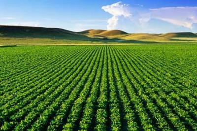 کانال کشاورزی