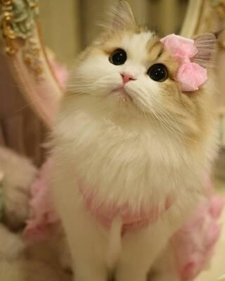 کانال عکس و گیف گربه ها