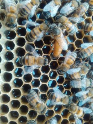کانال زنبورداری برای همه