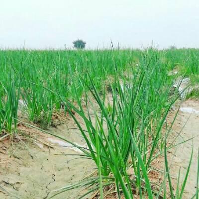 کانال فروشگاه بذر کشاورزی