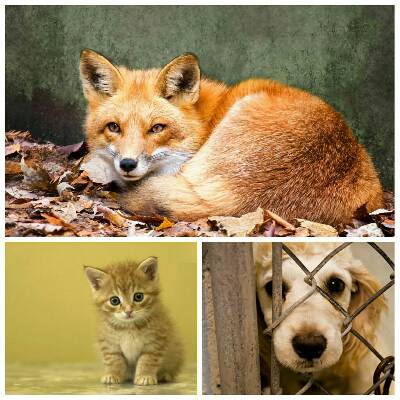 کانال حامی حیوانات