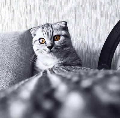 کانال حیوانات خوانگی