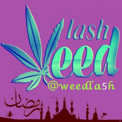 کانال weedlash