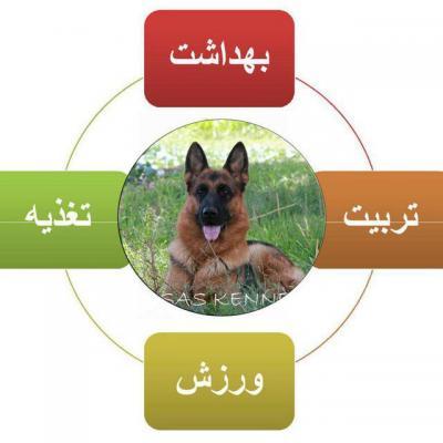 کانال تربیت سگ اسکای