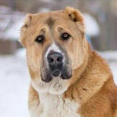 کانال پیج تخصصی سگ