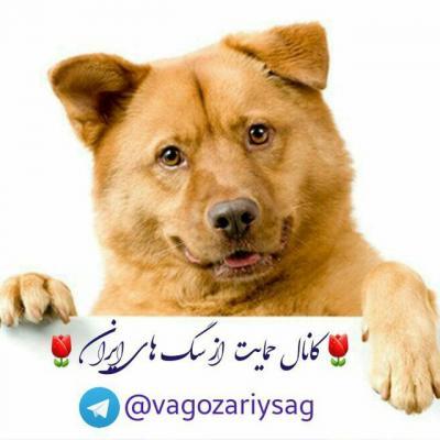 کانال واگذاری سگ