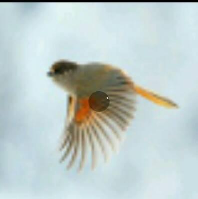 کانال پرنده مهاجر