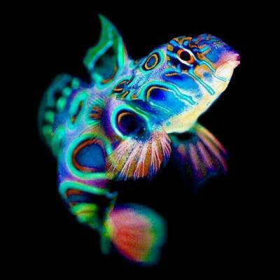 کانال ماهی ها