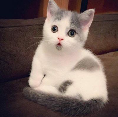 کانال گربه ملوسه