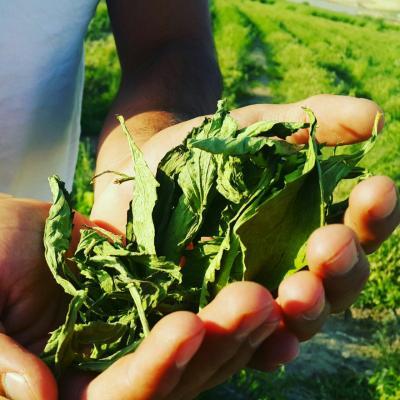کانال بازرگانی گیاه دارویی
