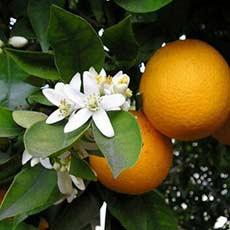 کانال پرتقال