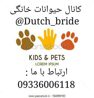 کانال 😇Dutch_bride😎