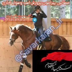 کانال پرورش اسب و سوارکاری