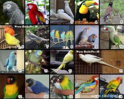 کانال جهان حیوان و پرند