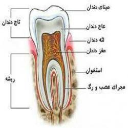 کانال دستیاری دندانپزشکی