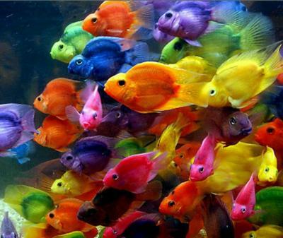 کانال فروشگاه رنگ نگارخانه