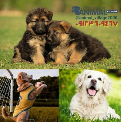 کانال خرید و فروش سگ