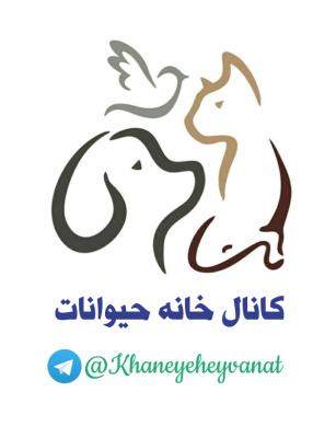 کانال واگذاری و فروش حیوان