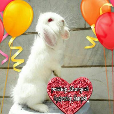 کانال پت شاپ خرگوش