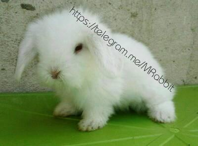 کانال *…My Rabbit…*