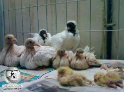 کانال کلکسیون پرنده و مرغ