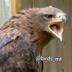 کانال معرفی پرندگان