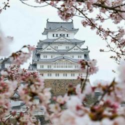 کانال آموزش زبان ژاپنی