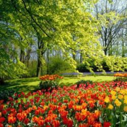 کانال نگهداری از گل و گیاهان آپارتمانی