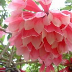 کانال گلزار، پایتخت گل و گیاه ایران