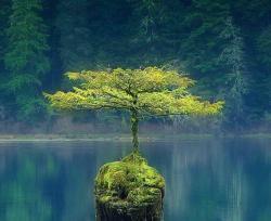 کانال زیبایی های منابع طبیعی