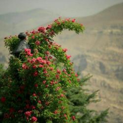کانال باغ گیاه شناسی ملی