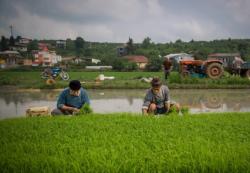 کانال (مزارع کشاورزی برادران بی ذر)