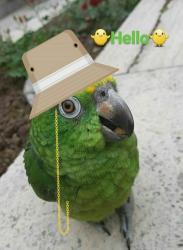 کانال دوستداران پرندگان